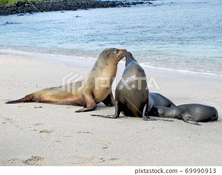 加拉帕戈斯海獅 69990913