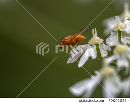 yellow fly isolated on green 70001841