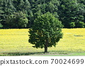 Sunflower field Hokkaido 70024699