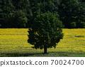 Sunflower field Hokkaido 70024700