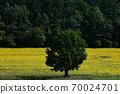 Sunflower field Hokkaido 70024701