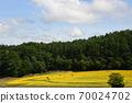 Sunflower field Hokkaido 70024702