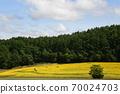 Sunflower field Hokkaido 70024703