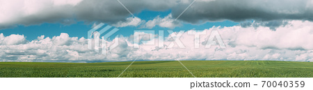 Countryside Rural Green Wheat Field Meadow Landscape In Summer Sunny Day. Scenic Sky With Clouds On Horizon. Panorama 70040359