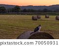 一隻貓站在北海道牧場上的草卷上 70050931