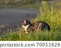 一隻貓站在夕陽下的路邊 70051626