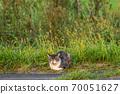 一隻貓在夕陽下睡在路邊 70051627