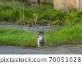 一隻貓站在路邊 70051628