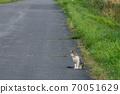 瞄準路邊的貓 70051629