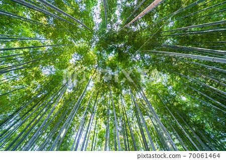 Numakumata Funabori公園的竹林 70061464
