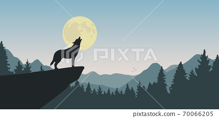 wolf howls at full moon nature landscape 70066205