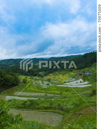 오카야마 현 上籾의 계단식 논 (일본의 계단식 밭 백선) 70075009