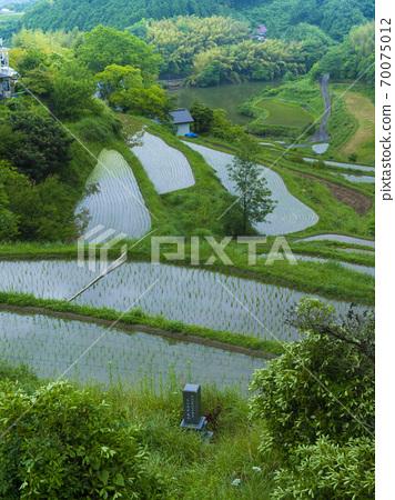 오카야마 현 北庄의 계단식 논 (일본의 계단식 밭 백선) 70075012