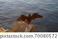 bird 70080572