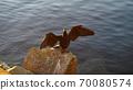 bird 70080574