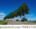 一排白樺樹和旅遊自行車(北海道美瑛鎮) 70081739