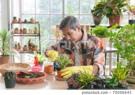 A senior farmer pruning a tree. Happy retired man pruning a shrub at home. 70086645