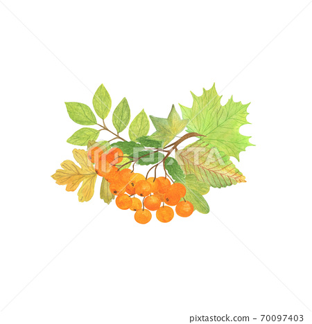 Autumn elements arrangement with mountain ash, greenish and yellow leaves seasonal fall holidays watercolor floral illustration, composition for halloween and thanksgiving 70097403