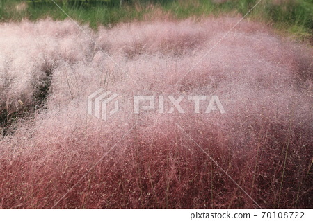 핑크 뮬리 그라스가 보이는 아름다운 가을 풍경 70108722