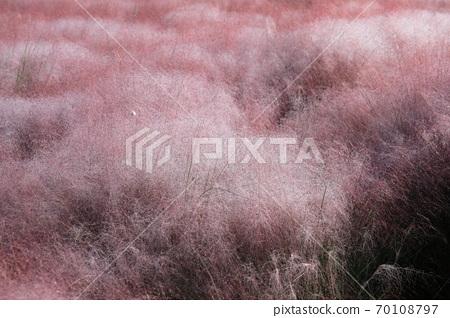 핑크 뮬리 그라스가 보이는 아름다운 가을 풍경 70108797