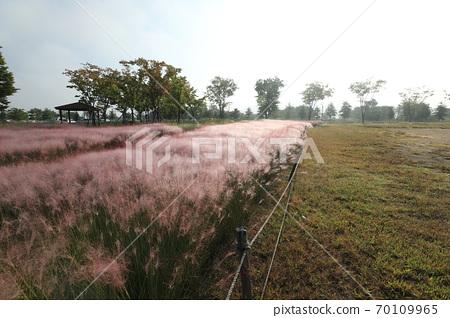 핑크 뮬리 그라스가 보이는 아름다운 가을 풍경 70109965