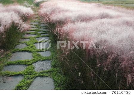 핑크 뮬리 그라스가 보이는 아름다운 가을 풍경 70110450