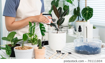 Young Asian woman gardener in casual clothes taking care and squirts for house plant pots on the white wooden table, Concept of home garden and Stylish interior with a lot of plants 70111804