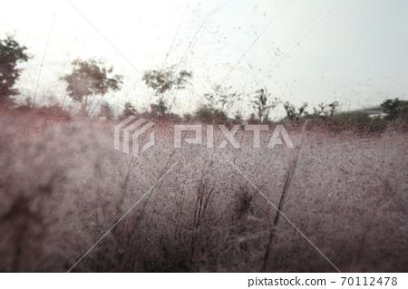 핑크 뮬리 그라스가 보이는 아름다운 가을 풍경 70112478