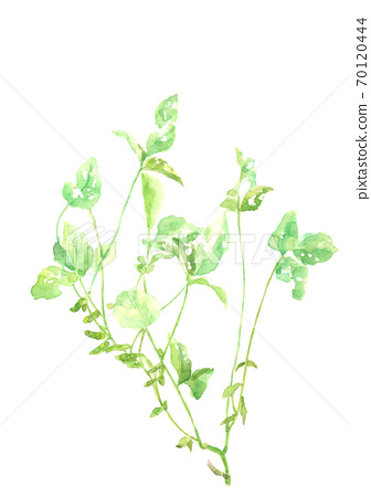 Black soybeans with leaves Fruit white background [watercolor] 70120444