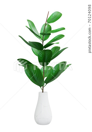 Decorative houseplant of exotic plant 70124098