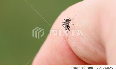 手指上的蚊子 70126025