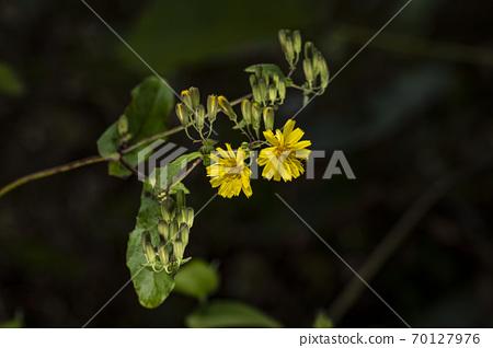 Korean Wildflowers & Wild Flowers 70127976