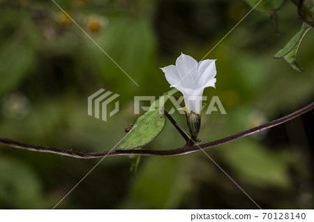 Korean wild flowers & wild flowers 70128140