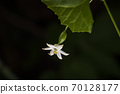 한국의 들꽃&야생화 70128177