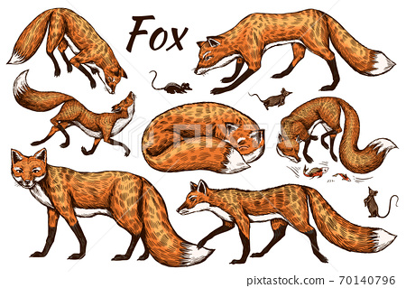 Wild red fox set. Forest ginger animal flying and jumping. Vector Engraved hand drawn Vintage sketch 70140796
