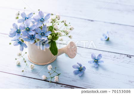 Blue star and gypsophila light blue flower material 70153086