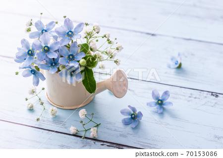 藍星和霞草淺藍色花材 70153086