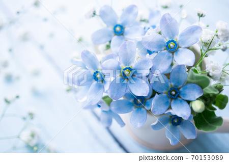 블루 스타와 카스미 잔디 하늘색 꽃 소재 70153089