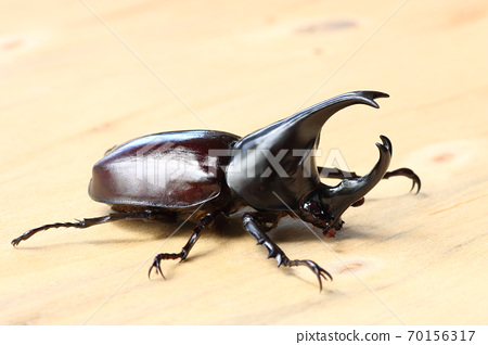 Stag beetle isolated on wood background. 70156317