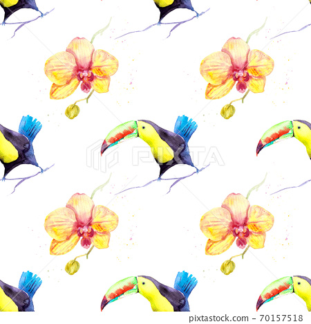 watercolor drawing of a bird - toucan and orchid 70157518