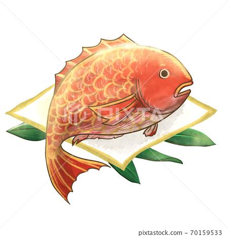 华丽鲷鱼的插图 70159533