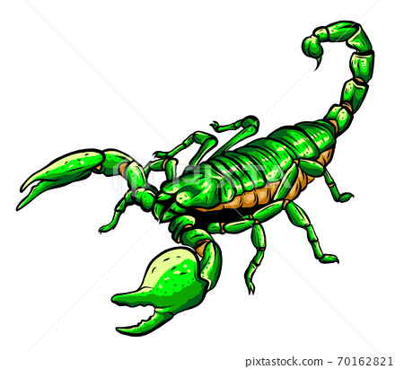 vector Scorpion tattoo - ornate exquisite scorpion image, sign horoscope 70162821
