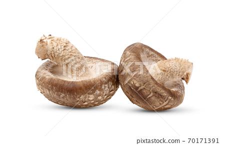 Shiitake mushroom on white background 70171391