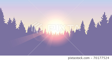 purple forest pine tree background at sunset 70177524