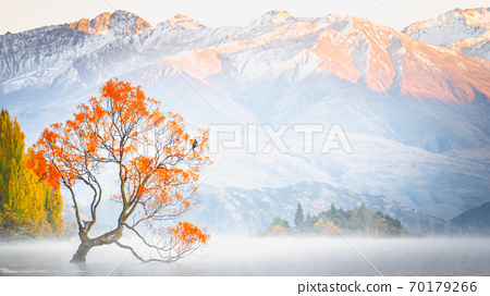 Scenic peaceful of lake Wanaka in the morning, Wanaka tree is one of the famous places of tourist attraction in New Zealand. Lake Wanaka is popular place for photographer to visit and take photograph. 70179266