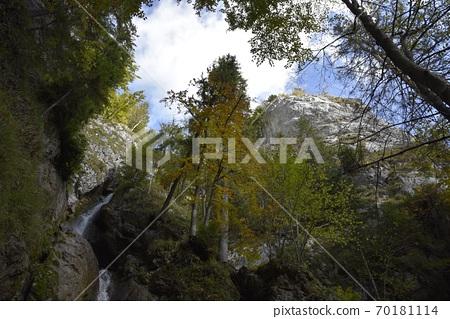 春尾天樹,白雲愛十,山頂搖滾日本生命力十足的樹木。 70181114