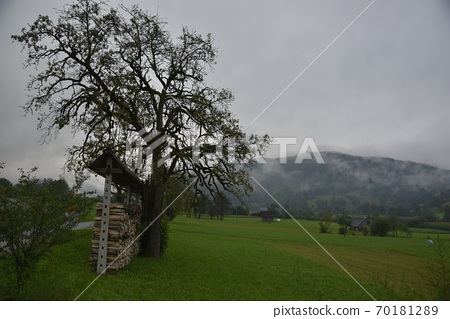 清代,山間人行道狀雲霧轉移,油草般的草原Wayama人行道狀con樹。 70181289