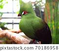 綠鳥 70186958