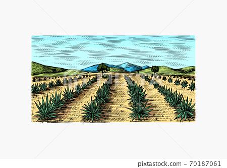 Agave field. Vintage retro landscape. Harvesting for tequila making. Engraved hand drawn sketch 70187061