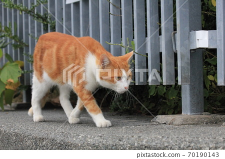 A brown-white cat walking outside the fence of the park 70190143